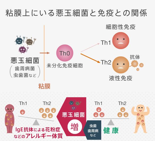 粘膜上にいる悪玉細菌と免疫との関係